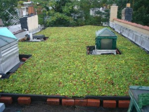 installed by: Brooklyn Greenroof