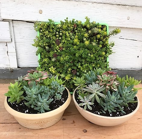 New succulent gardens ready!