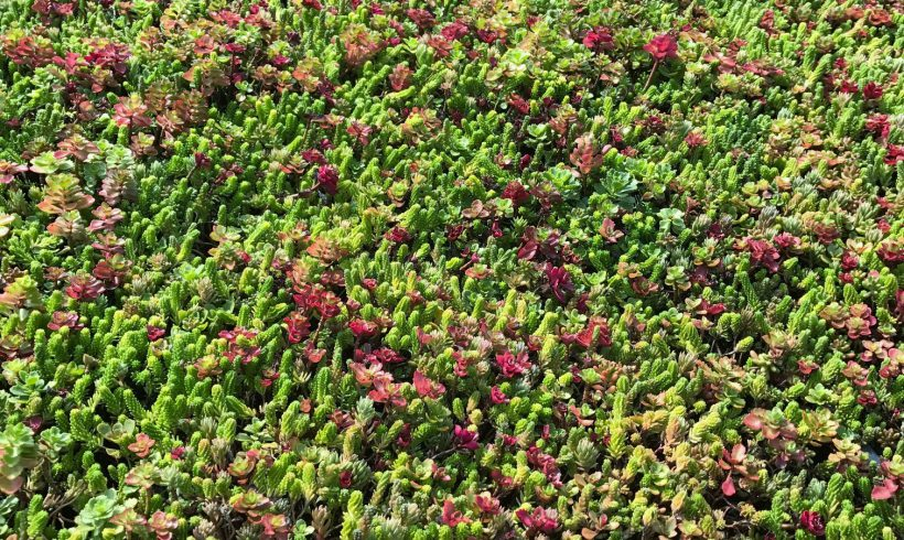 Fall is a great time to get your sedum jobs done!