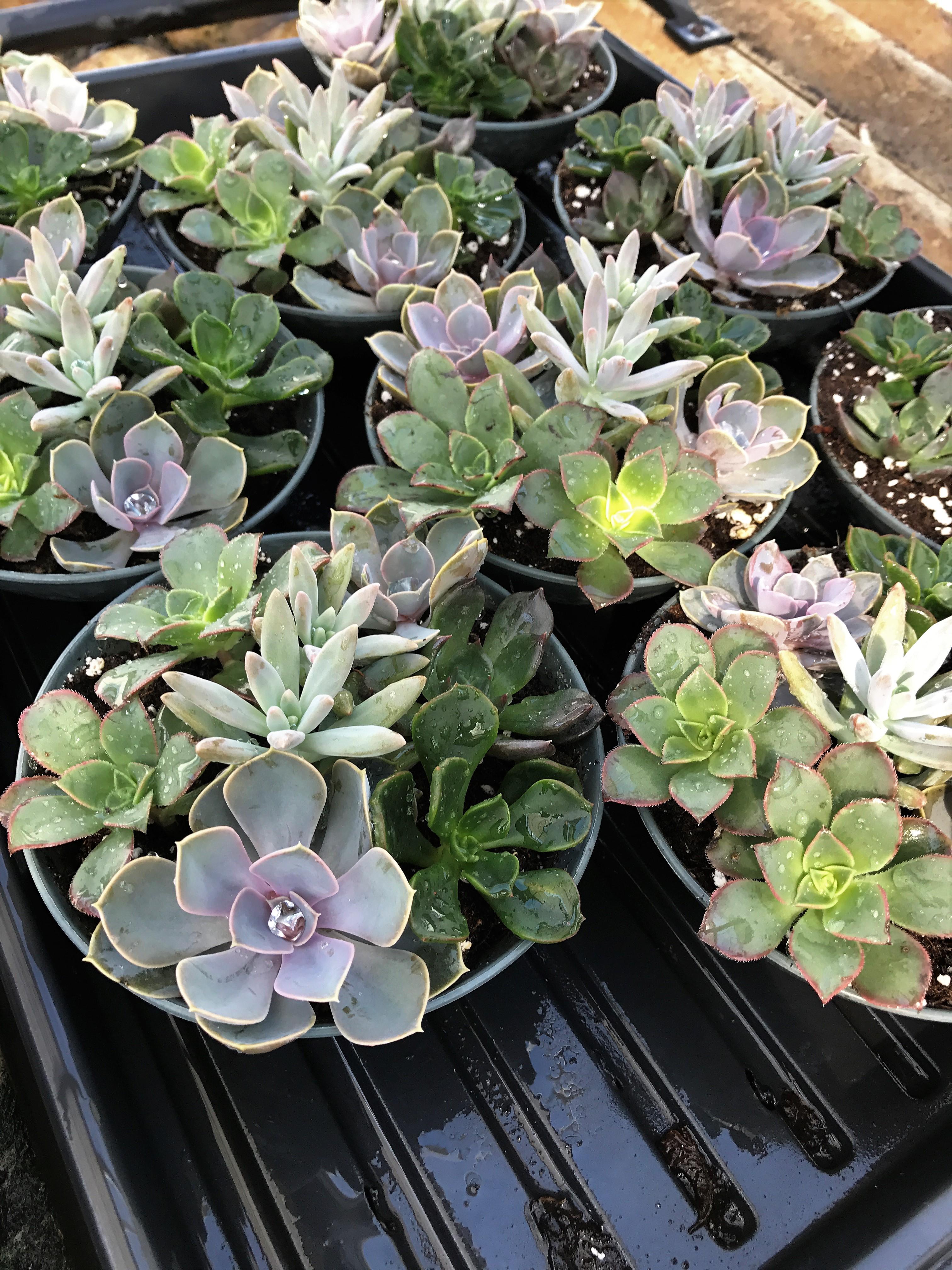 Spooky Succulents!