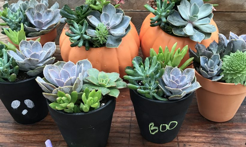 Spooky Succulents for Fall!